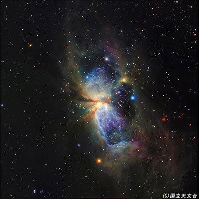 はくちょう座の星誕生23a.jpg