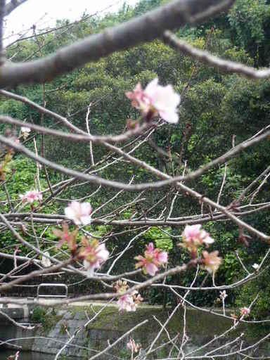 ルミックス11月桜 紅葉 004.JPG