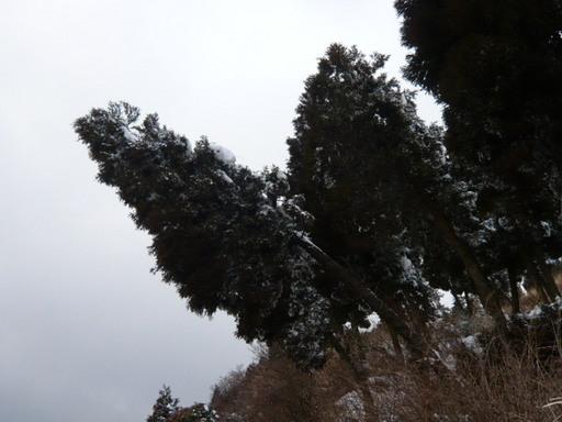 ルミックス有明海 阿蘇 054.JPG