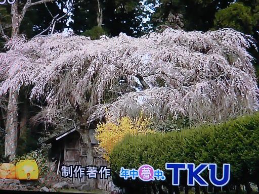 ルミックス遠山桜 007.JPG