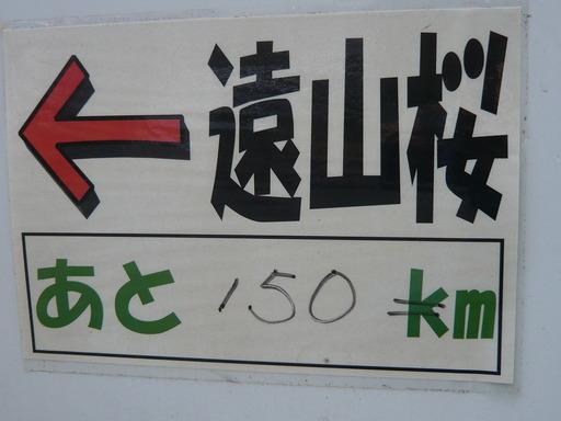 ルミックス遠山桜 041.JPG